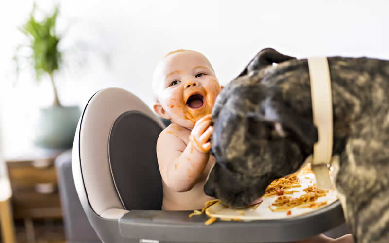 baby in highchair laughing while dog eats his food