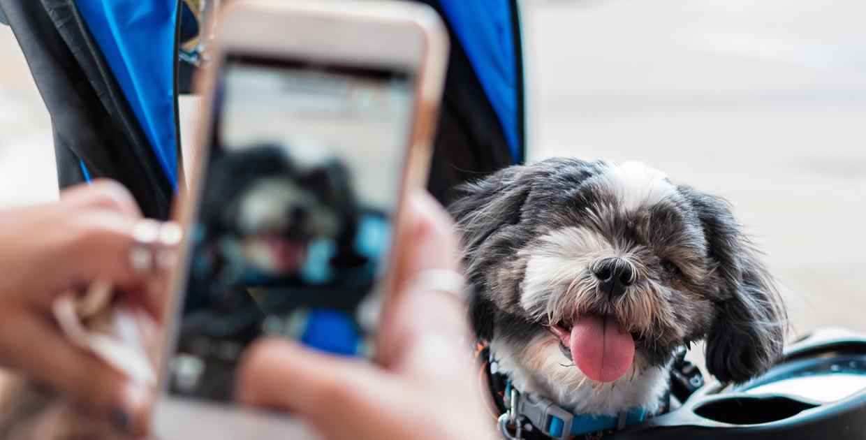 dog in pram with owner taking selfie