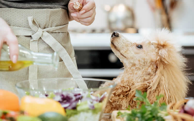 poodle watching owner cook a plant-based diet